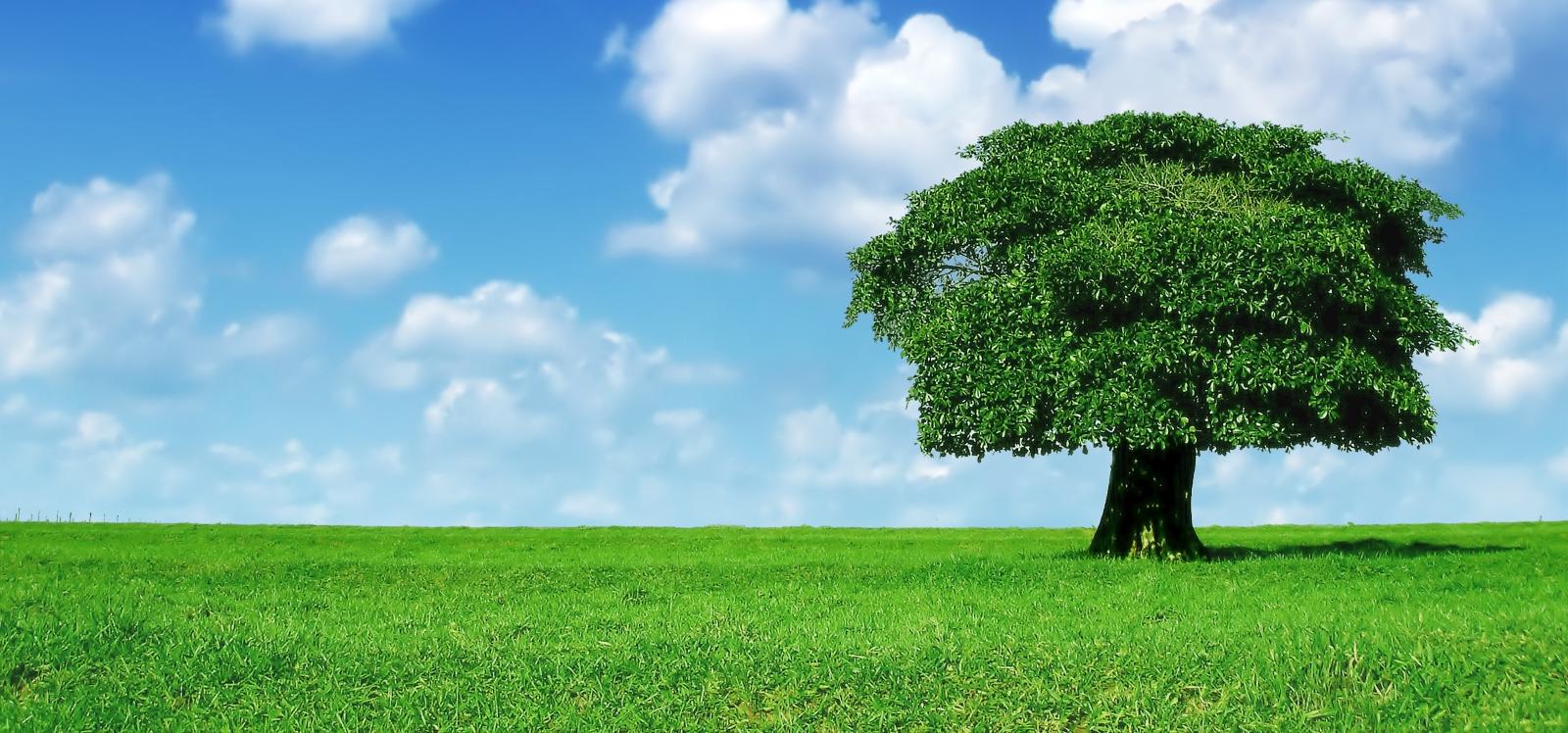 L'arbre de vie pour comprendre le cycle de réachat